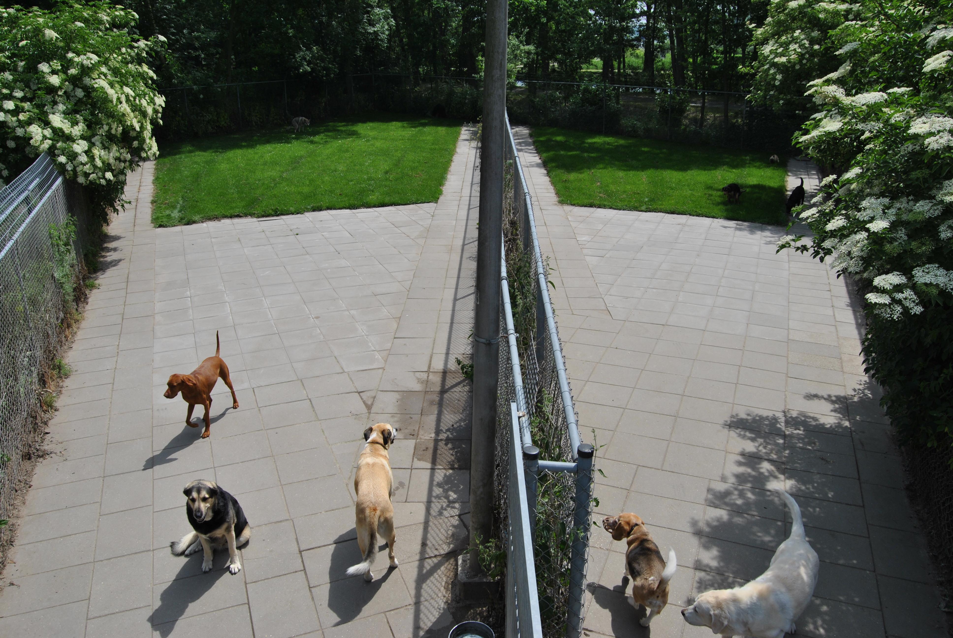 speelweides_grote_honden_pension_20130620_1070293142.jpg