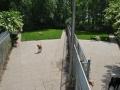 speelweides_grote_honden_pension_20130620_1087508731.jpg