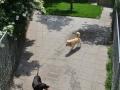 speelweides_grote_honden_pension_20130620_1480543711.jpg