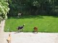 speelweides_grote_honden_pension_20130620_1643373188.jpg