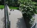 speelweides_grote_honden_pension_20130620_1848139683.jpg