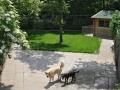 speelweides_grote_honden_pension_20130620_1904026069.jpg