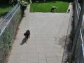 speelweides_grote_honden_pension_20130620_1970379515.jpg