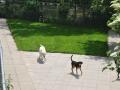 speelweides_grote_honden_pension_20130620_2051210965.jpg