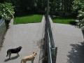 speelweides_grote_honden_pension_20130620_2060918690.jpg