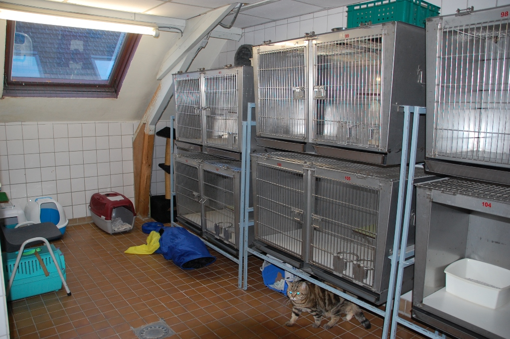 kattenzolder_20091228_1908521647.jpg
