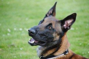 hondenpension Hilversum