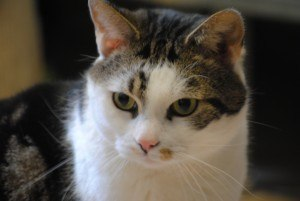 kattenpension Hilversum